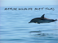 Marine wildlife boat tours